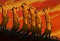 meerkat lion king